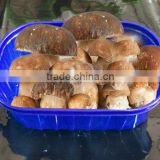 fruit and vegetable packing mushroom plastic tray