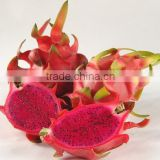 Red Heart Fresh Dragon Fruit
