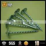 Screw thread nails/Galvanized umbrella head roofing Nails china supplier