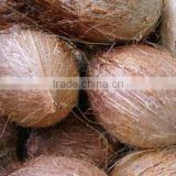 Husk removed coconuts from India