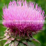 milk thistle extract Water-soluble silymarin