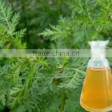 Hot sale & hot cake high quality 100% natural Artemisia Annuae Oil wormwood essential with reasonable price and fast delivery !!
