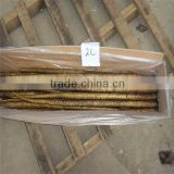 burdock/fresh burdock root for export