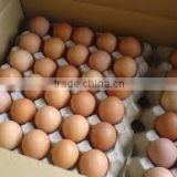 Farm Fresh Chicken Table Eggs,Farm Fresh Chicken Table Eggs