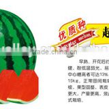 2015 High Sweet Chinese Hybrid F1 Sweet Watermelon Seeds For Growing-Super Green No.7 F1
