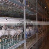 automatic chicken cage-poultry feeding system
