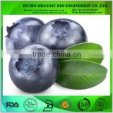 Freeze dried blueberry powder wholesale / Instant blueberry powder