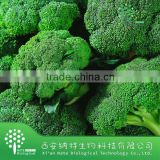 GMP factory organic Vegetable powder Broccoli extract