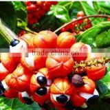 weight loss Natural Guarana extract 10:1 20:1 Paullinia cupana Kunth Caffeine 5%~20%