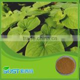 Hot Selling High Quality kava extract powder