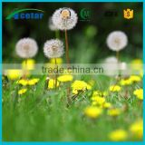 Alibaba trade assurance of Dandelion printed bedding set