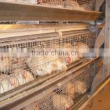 9LCDr-3168 Automatic H Type Poultry Equipment for Broiler