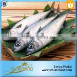 Block Frozen Japanese Mackerel Fish