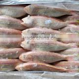 frozen Nemipterus virgatus golden threadfin bream