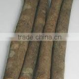 Professinal Supply Best Quality Cassia Whole