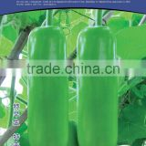 Bottle gourd seeds high purity seed