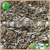 Companies Email Address for Bird Seed Manufactures Sun Flower Seeds in Iran
