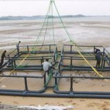 Anti-oxidant Aquaculture Cage System Corrosion Resistance