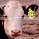 RFID animal ID flag ear tag for tagging cattle/pig/sheep