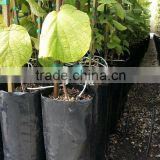 Poly Plastic tree grow bag