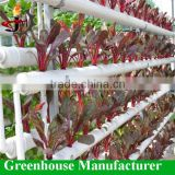 Indoor hydroponic growing equipment for greenhouse