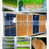 13. HRSD-100 M Automatic bean sprout machine / Bean/ barley sprout making machine 0086 15138918451