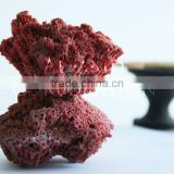 Corals from Sea Natural Red Rough Material Busad