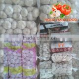 3P MESH BAG 10KG packings CARTON normal white Russia East Europe fresh garlic middle east Pakistan 5.5CM 6.0 CM