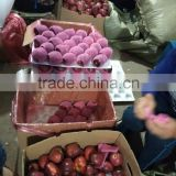 red delicious apple/ huaniu apple