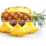 Fresh dried pineapple enzyme /pineapple powder /bromelain