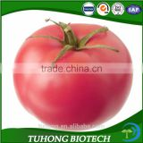 Green House Seeds Anti-TY Disease Tomato Seeds