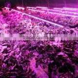 Wholesale Price Led Light for Orchids Optimum Light for Grow Plants 20w T8 4ft with Daisy-Chain
