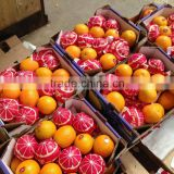Pallets for Egyptian Oranges