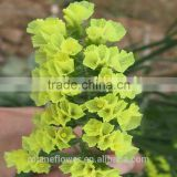 Promotional dried flowers roses flowers with 60-80cm long from Yunnan, China