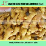 fresh wholesale ginger/air dry ginger Air Dried Ginger organic China anqiu city