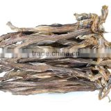 Export Dried Bombay Duck fish with Competitive Price and BEST QUALITY