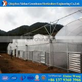 plastic polythene greenhouses for sale