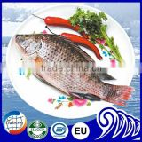 FROZEN TILAPIA FISH SCALE D & GUTTED IQF IWP