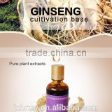 best price for Bulk Ginseng oil