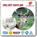 500mg Private Label Deer Antler Velvet Extract Powder Hard Capsules