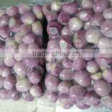 Manufacture of Peeled Shallot