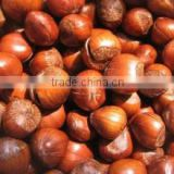 Grade A Best Price Raw Hazelnut