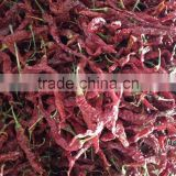 DRIED HOT RED CHILLI