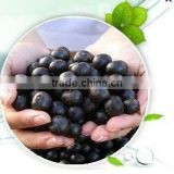 supply 100% pure Acai berry Extract/acai juice powder