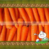 fresh carrots for sale/fresh Chinese carrots/ baby carrots