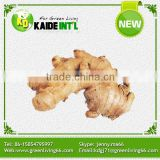 OEM Or ODM Chinese Fresh Ginger Root For Sale