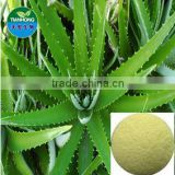 Pure Natural Aloe vera extract Gel Freeze Dried Powder Aloin 80%
