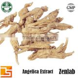 angelica powder extract for angelica root oil