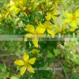 Chinese supplier St johns wort extract Hypericin 0.5%