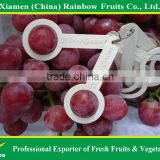 Fresh Sweet Red Globe Grape tabel grapes in good condition